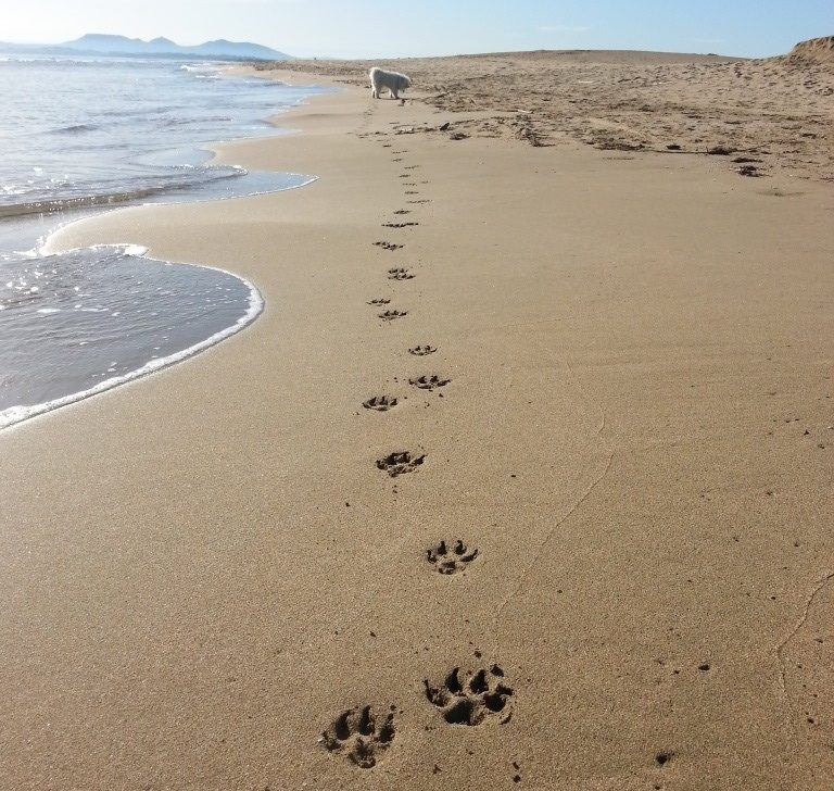Dog friendly beaches Costa Brava